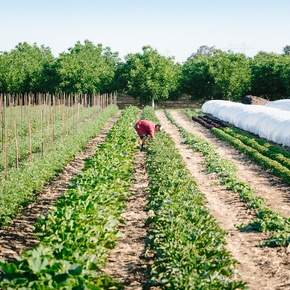 Free Spirit Farms, a majestic farm with exceptional producing sourcing to 40 of San Francisco's top restaurants.